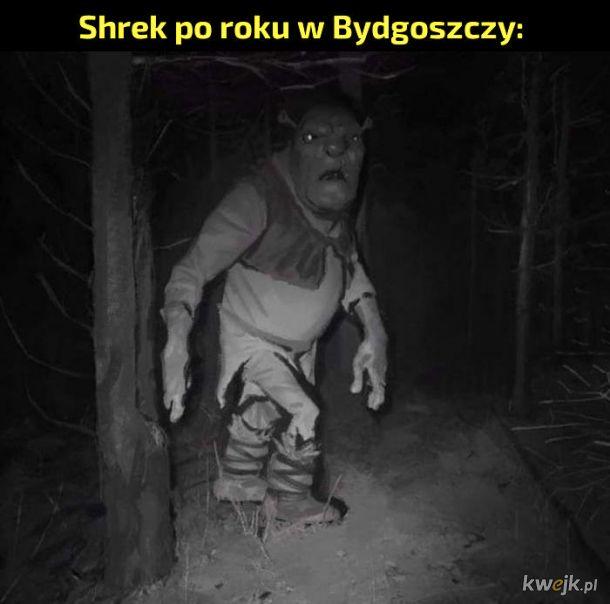 Shrek w Polsce