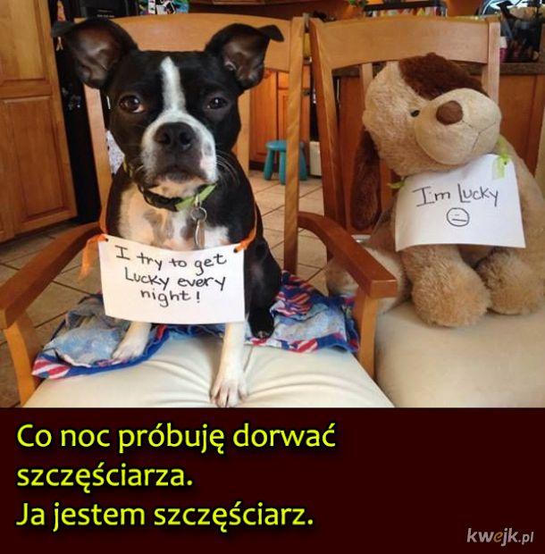 Psy, które były wyjątkowo niegrzeczne, obrazek 8