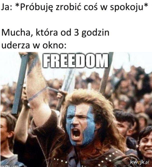 wolność!!!