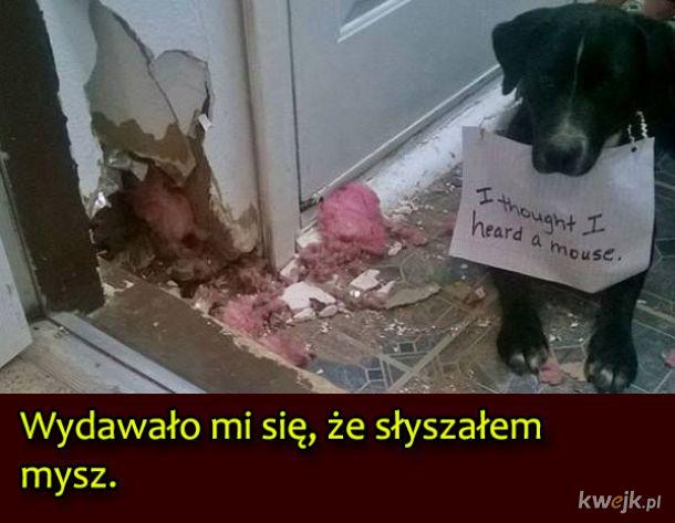 Psy, które były wyjątkowo niegrzeczne, obrazek 12