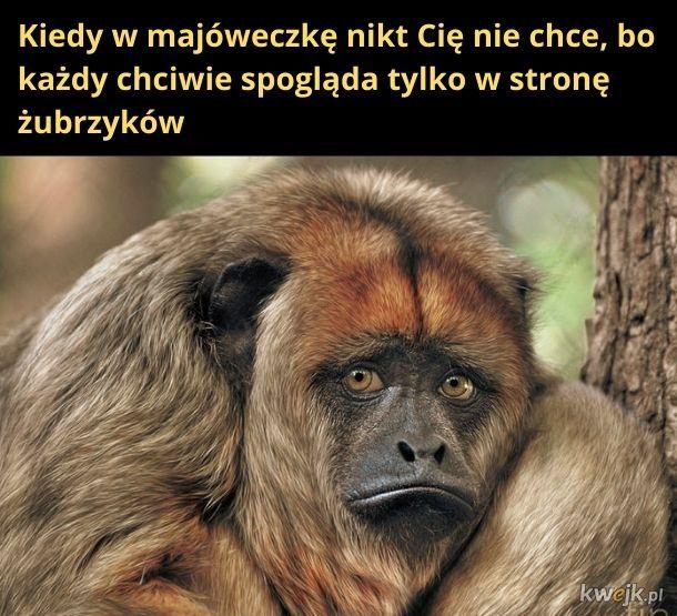 Smutna małpeczka
