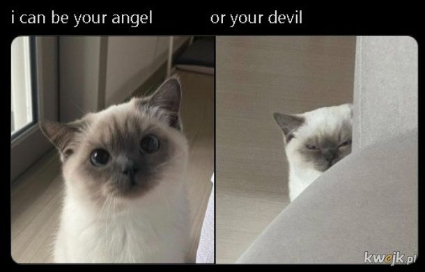 Wybieraj.
