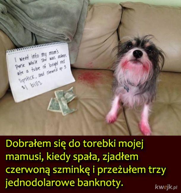 Psy, które były wyjątkowo niegrzeczne, obrazek 13