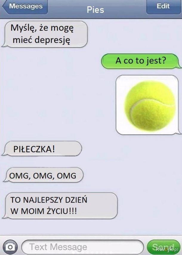 Rozmowa z psem