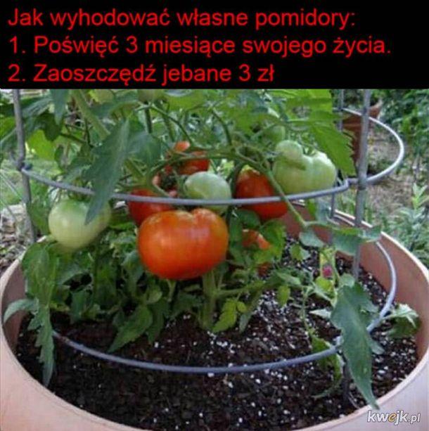 Adio pomidori
