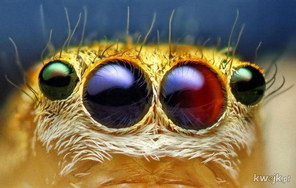 Urocze, przytulaśne pajączki