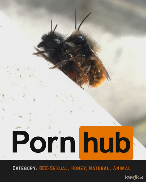 Bzykające pszczółki