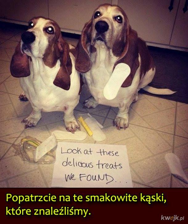 Psy, które były wyjątkowo niegrzeczne, obrazek 6