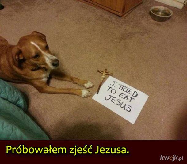 Psy, które były wyjątkowo niegrzeczne, obrazek 3