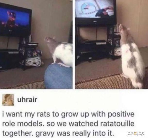 Szczury to inteligentne stworzenia.