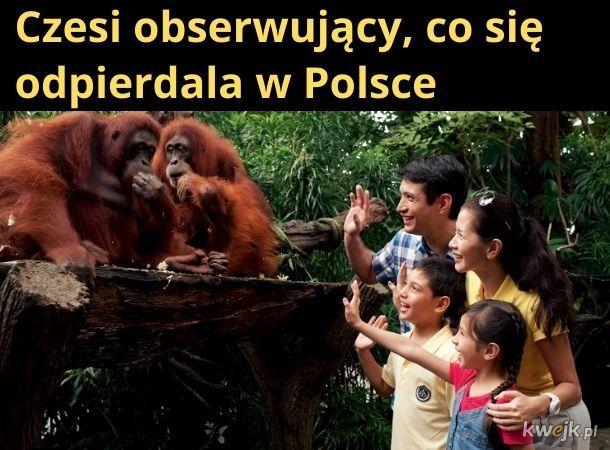 Takie zoo