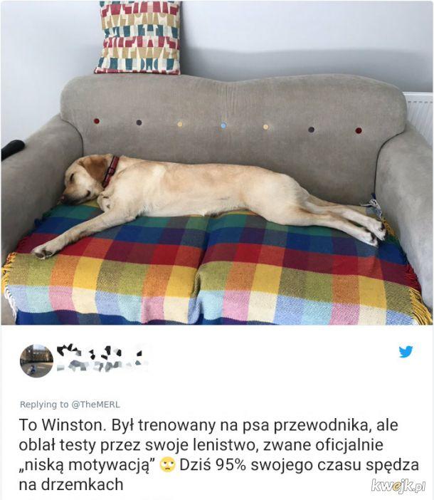 Psy, które trochę minęły się z powołaniem, obrazek 12