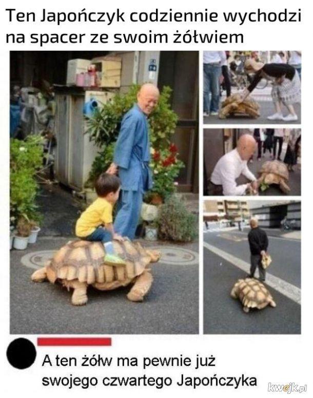 Spacer z żółwiem