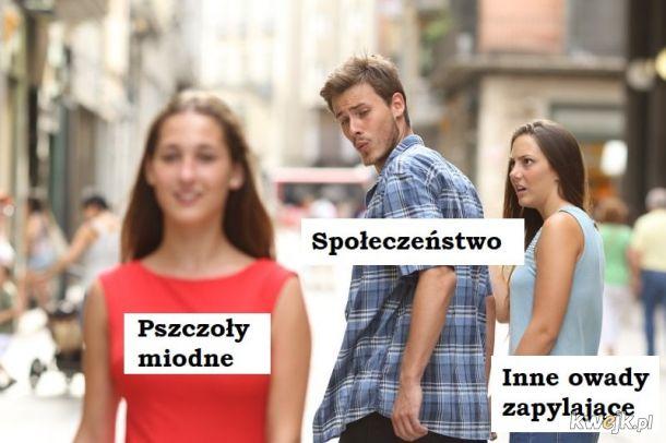 Biedne owady :(