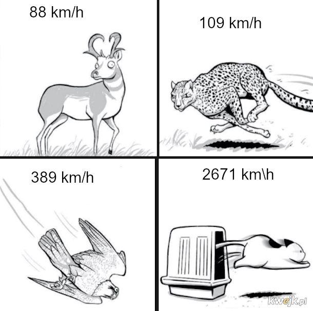 Prędkości zwierząt