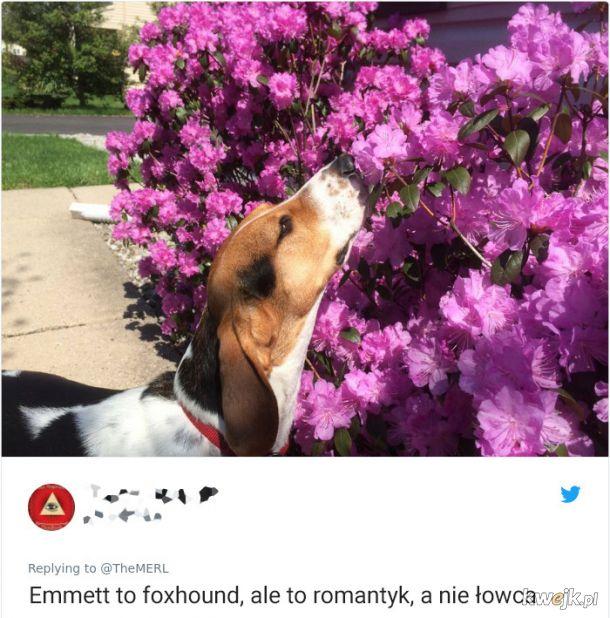 Psy, które trochę minęły się z powołaniem, obrazek 11