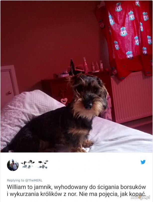 Psy, które trochę minęły się z powołaniem, obrazek 2