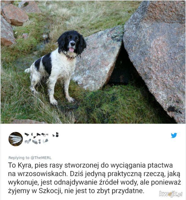 Psy, które trochę minęły się z powołaniem, obrazek 4