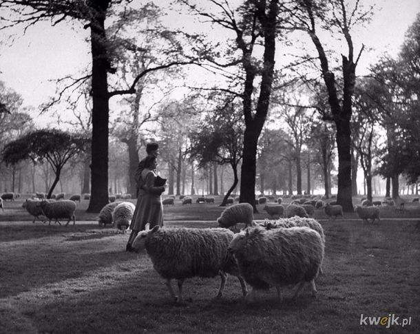 24 wzruszające fotografie ukazujące miłość w czasie wojny.