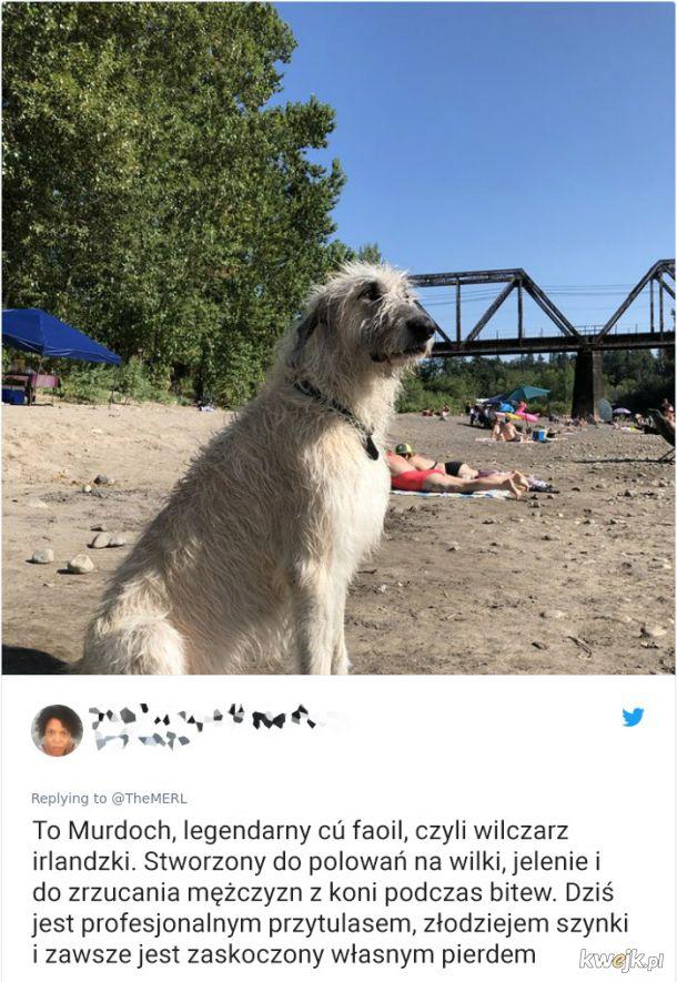Psy, które trochę minęły się z powołaniem, obrazek 3