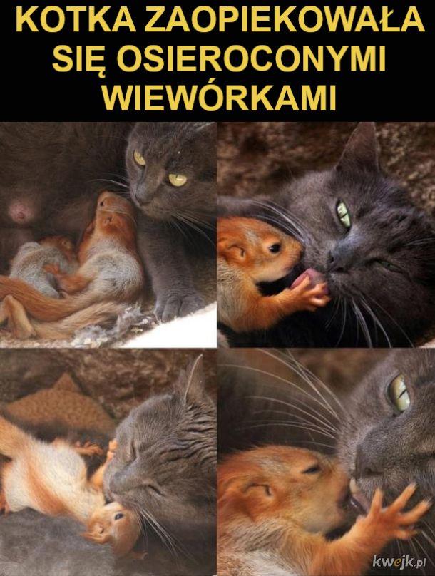 Osierocone wiewiórki
