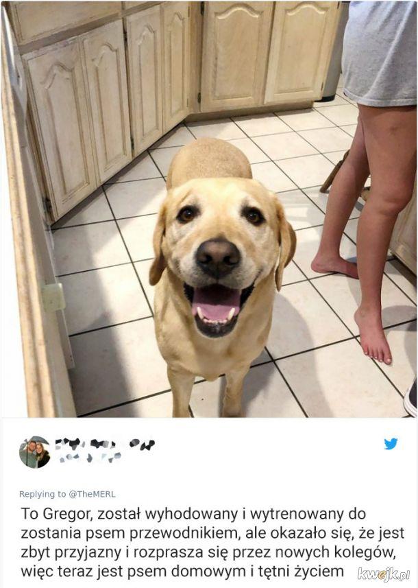 Psy, które trochę minęły się z powołaniem, obrazek 20