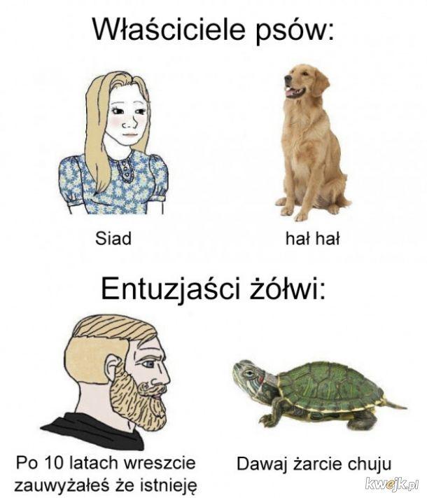 Właściciele żółwi