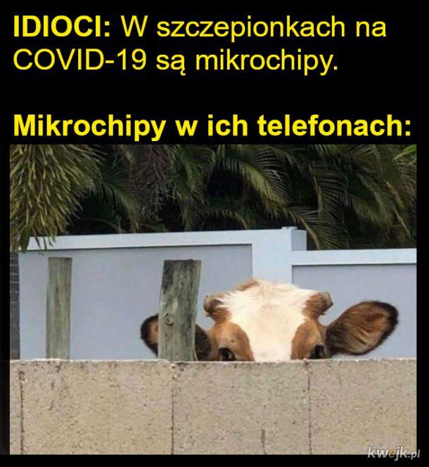 MIkrochipy
