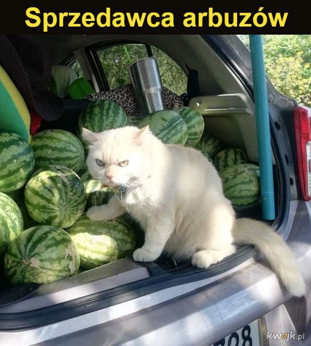 Koty, które nie chciały być na utrzymaniu swoich właścicieli, więc podjęły pracę