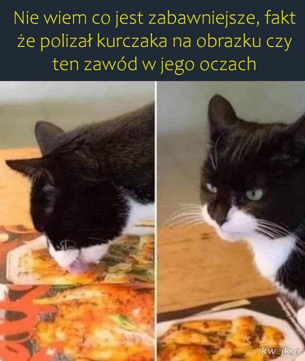 Zły koteł