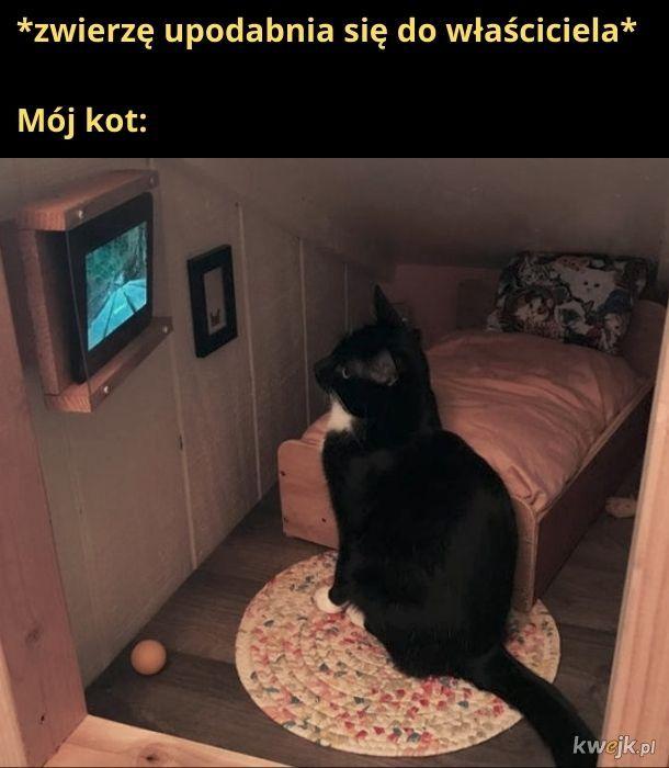 A i bez telewizora tylko żarł i nie wychodził z domu
