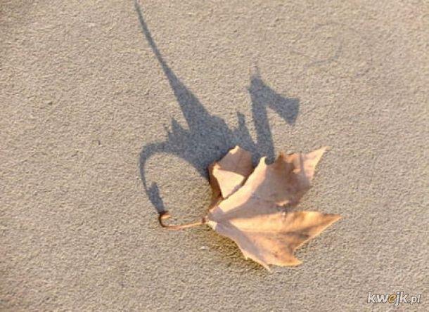 Ten cień liścia przypomina smoka
