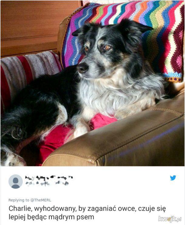 Psy, które trochę minęły się z powołaniem, obrazek 10