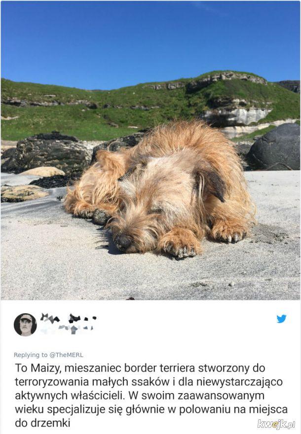 Psy, które trochę minęły się z powołaniem, obrazek 6
