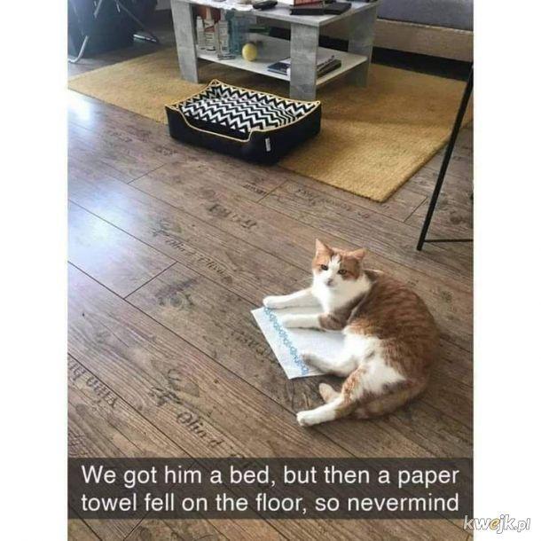Ręcznik papierowy też warto przetestować