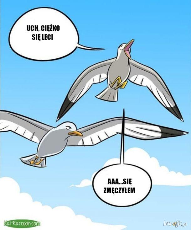 Komiks o ptakach wodnych z animowanymi kadrami