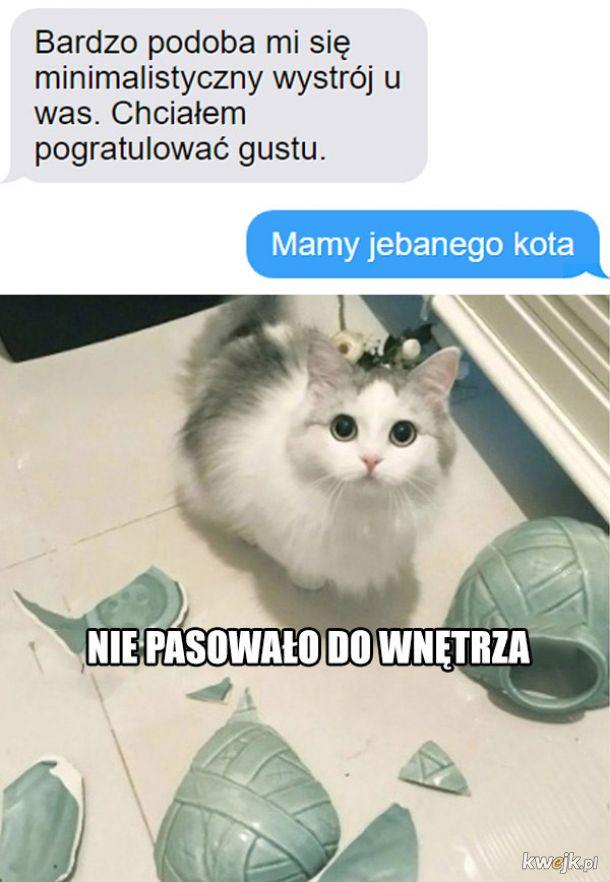 Wystrój wg kota