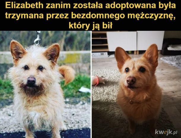 Przed i po: zdjęcia zwierząt, które znalazły kochające domy