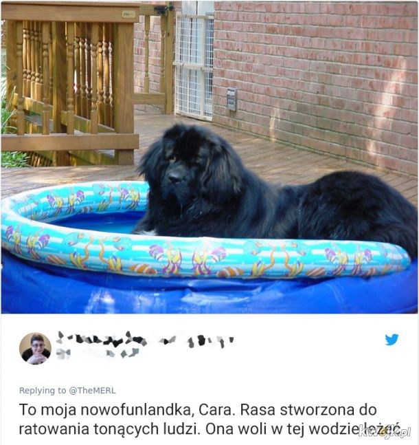 Psy, które trochę minęły się z powołaniem, obrazek 17