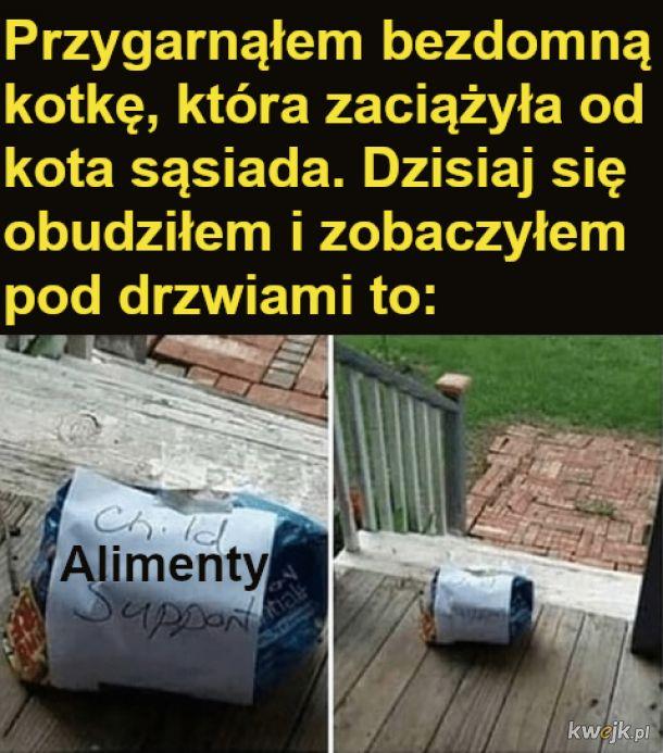 Alimenty xd