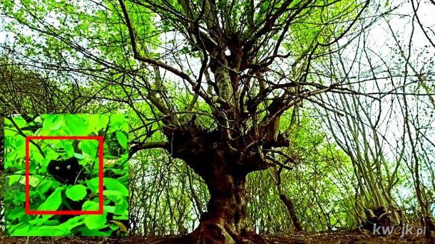 Alien or Humanoid creature caught on camera in the forest. walking in the woods https://youtu.be/YwTIHVgLAzY