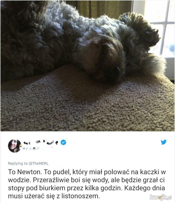 Psy, które trochę minęły się z powołaniem, obrazek 18