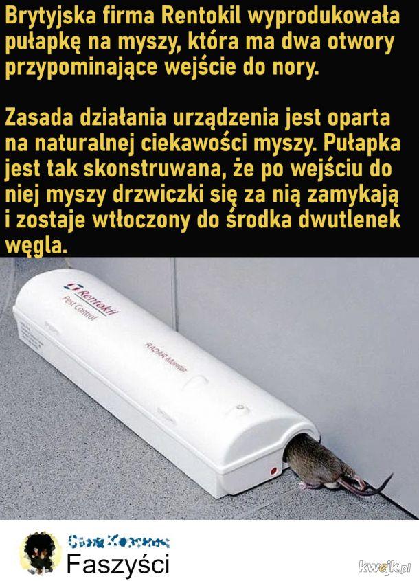 Zagazowują myszy ;o