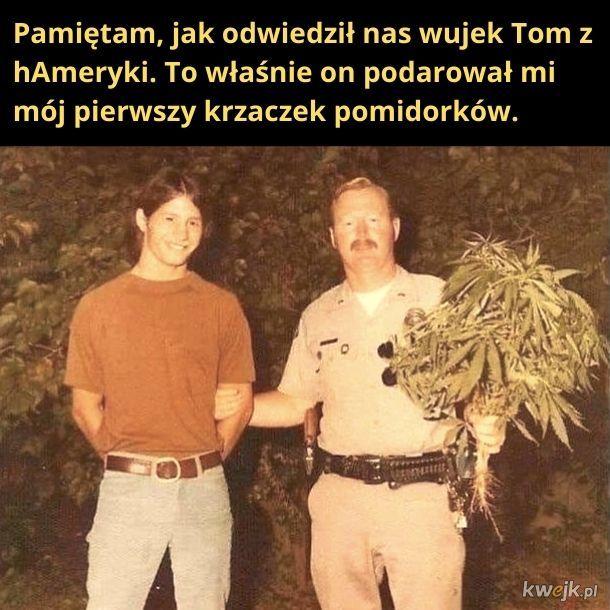 Pomidorki wuja Toma