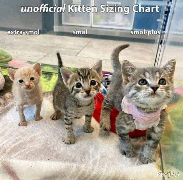Rozmiary kotków