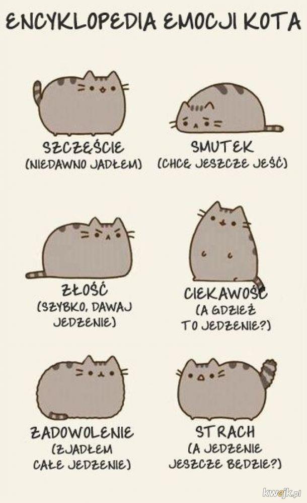 cała prawda o kotach
