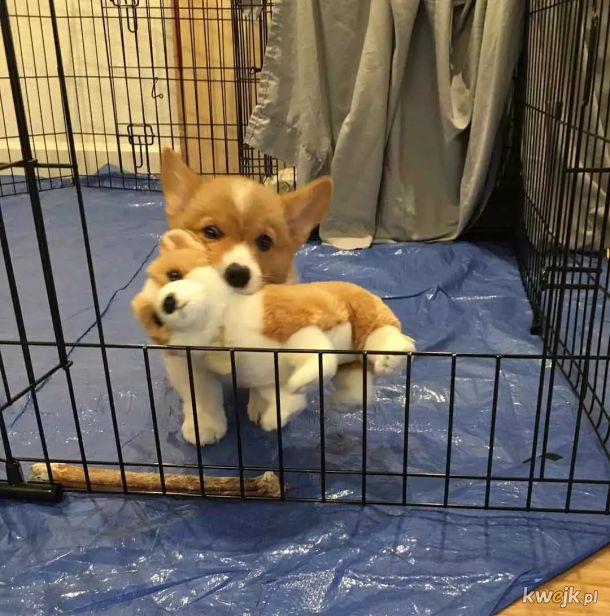 Potrzebujesz dawki słodkości? Oto psiaki z ich przytulankami!