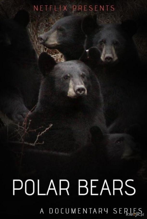Niedźwiedzie Polarne - adaptacja Reflux.