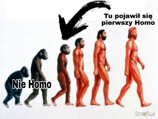 Homo Ewolucja