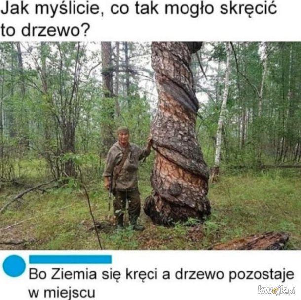 Skręcone drzewo